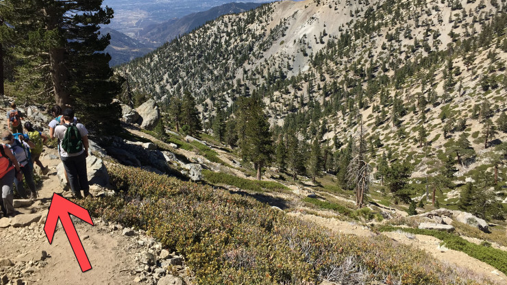 Best Hiking Trails For Dogs Near Me