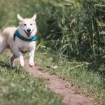 Best Place for Dog Walking Trails